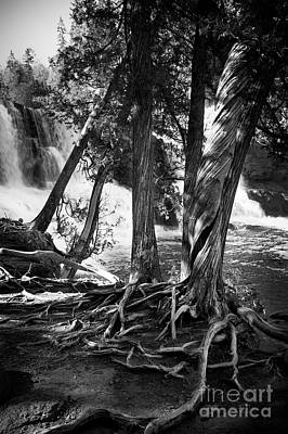 By The Falls Print by Perry Webster