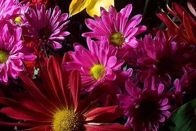 Bloom Photograph - Cacophony Of Color by Joe Kozlowski