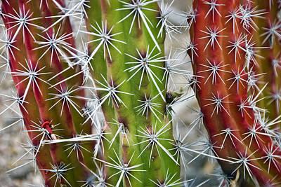 Arizona Photograph - Cactus Colors by Dave Dilli