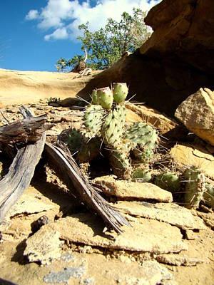 Danny Garcia Photograph - Cactus by Danny Garcia