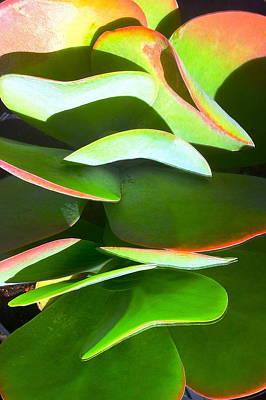 Cactus Wave Print by Paul Washington