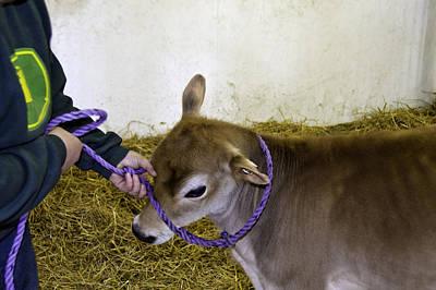 Bull Photograph - Calf Roping by LeeAnn McLaneGoetz McLaneGoetzStudioLLCcom