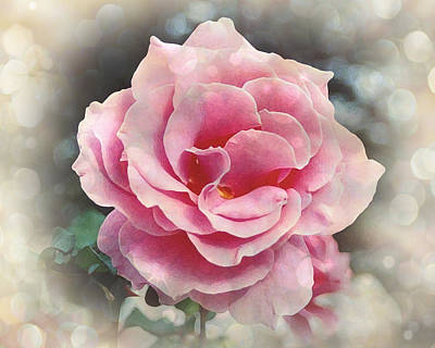 Mission Ventures Photograph - California Rose by Terry Eve Tanner