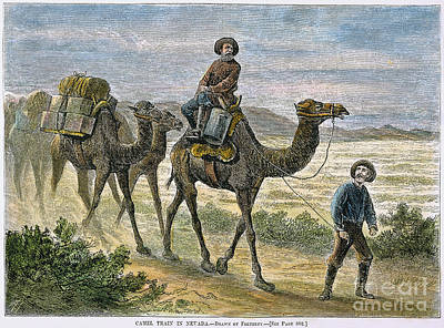 Camel Photograph - Camel Express, 1877 by Granger