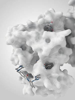 Cancer Protein And Drug Complex Print by Ramon Andrade 3dciencia
