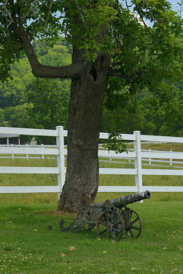 Lichen-covered Fence Photograph - Cannon Tree And Fence by Douglas Barnett