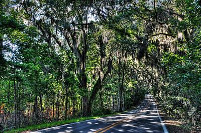 Canopy Road Original by Alex Owen