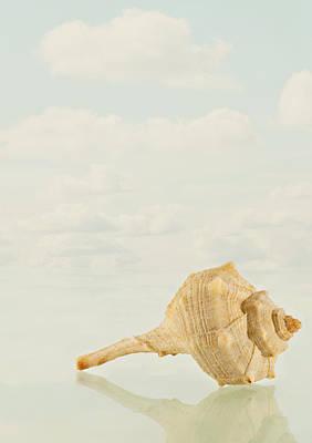Conch Photograph - Caracola by Vicente Gonzalez