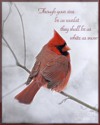 Cardinal In The Snow - D001540 Print by Tandem Designs