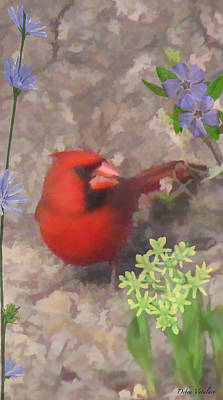 Cardinals In Watercolor Painting - Cardinal Springtime by Debra     Vatalaro