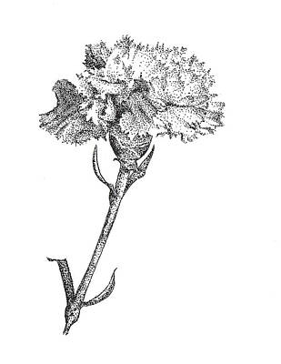Dot Drawing - Carnation by Christy Beckwith