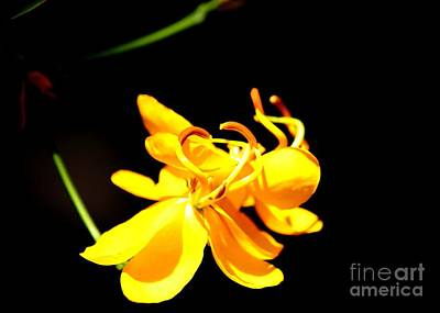 Cassia Blossoms Photograph - Cassia Blossom by Theresa Willingham
