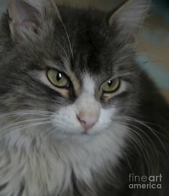 cat Print by Alisa Tek