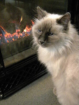 Cat And The Fireplace Print by Patricia Drohan