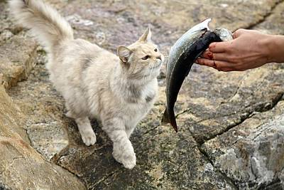 Cat Being Fed A Fish Print by Bjorn Svensson