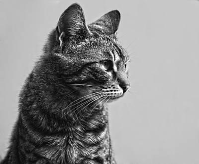 Cat Print by Chelaru Catalin Ionut