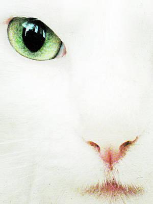 Cat Eye Print by Julie Niemela