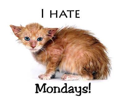 Cat Hates Monday Print by Joe Myeress