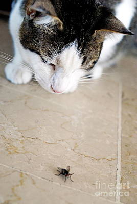 Cat Hunting The Fly Print by Sami Sarkis