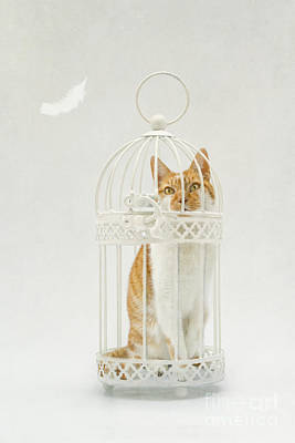 Cat In A Birdcage Print by Catherine MacBride