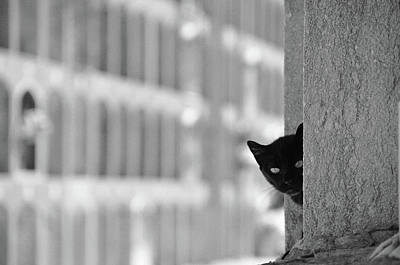 Cat In Cemetery Print by All copyrights reserved by Harris Hui