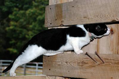 Kitten Photograph - Cat Looking Thru The Knot Hole by LeeAnn McLaneGoetz McLaneGoetzStudioLLCcom