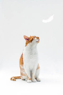 Images Of Cats Photograph - Cat Looking Up Towards Falling White Feather by Image by Catherine MacBride