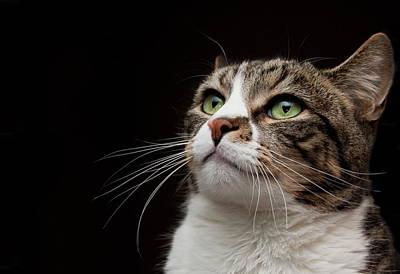 Green Eyes Photograph - Cat  Looking  Upward by Monica Fecke