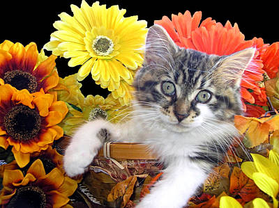 Cat Power - Sassy Kitten Hanging Out While Staring At Me - Thanksgiving Kitty - Falltime Flowers Print by Chantal PhotoPix