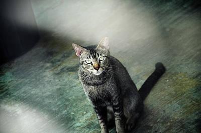 Cat Sitting On Floor Print by Raj's Photography