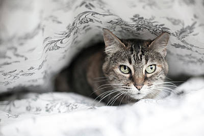 Of Cats Photograph - Cat Under In Blankets by Image taken by Mayte Torres