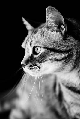 Cat Waiting The Right Moment Print by Marc Garrido