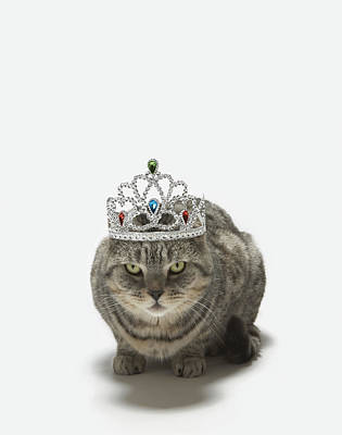 Cool Jewelry Photograph - Cat Wearing A Tiara by Tim Macpherson