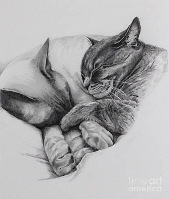Buddy Drawing - Catching Some Shuteye by Margit Sampogna