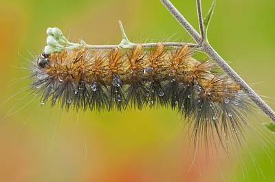 Caterpillar On A Rainy Day Print by Bonnie Barry