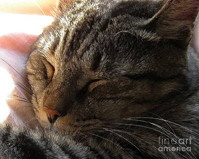 Dale Ford Photograph - Catnap by Dale   Ford