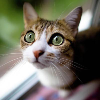 Green Eyes Photograph - Cat's Eyes by Emmanuelle Brisson