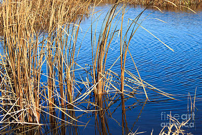 Garden Scene Mixed Media - Cattail Reeds by Ms Judi