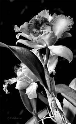 Cattleya - Bw Print by Christopher Holmes