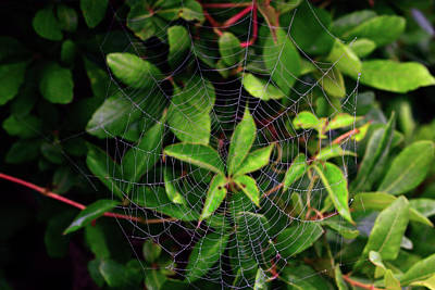 Spiderweb Photograph - Charlotte's Web by Rick Berk