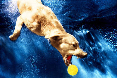 Diving Dog Photograph - Chase by Jill Reger