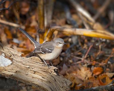 Mockingbird Digital Art - Checking Out His Territory - Mockingbird by J Larry Walker