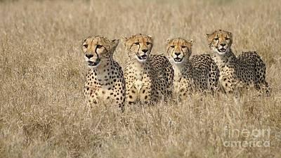 Cheetah Family Print by Mareko Marciniak
