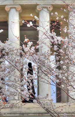 Cherry Trees Photograph - Cherry Blossoms Washington Dc 1 by Metro DC Photography