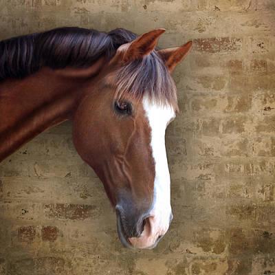 Chestnut Pony Portrait Print by Ethiriel  Photography