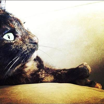 Cats Photograph - Chillin' by Natasha Marco