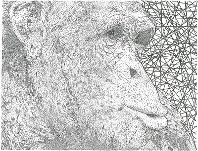 Chimpanzee Drawing - Chimpanzee by Al Buchanan