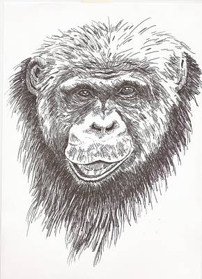 Chimpanzee Drawing - Chimpanzee by Pat Barker