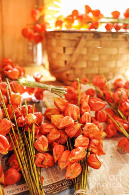 Chinese Lanterns Print by HD Connelly