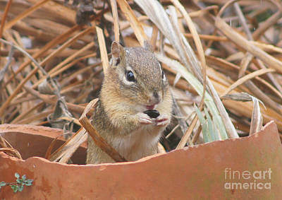 Chipmunks Are So Cute Print by Robert E Alter Reflections of Infinity LLC